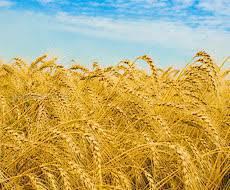Переваги зимої кальцифікації ґрунтів!