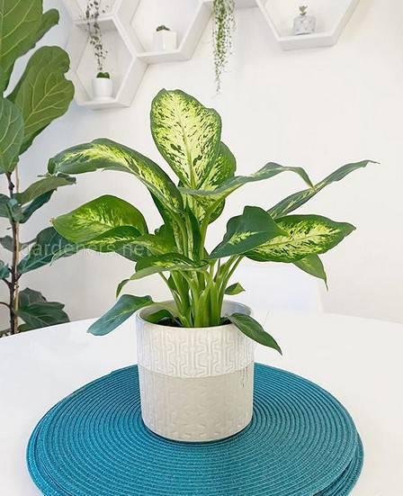 Які кімнатні рослини можна вирощувати в темних кімнатах?
