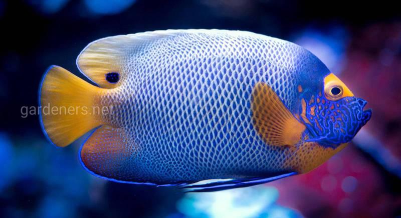 Аквариумные рыбки: редкие виды