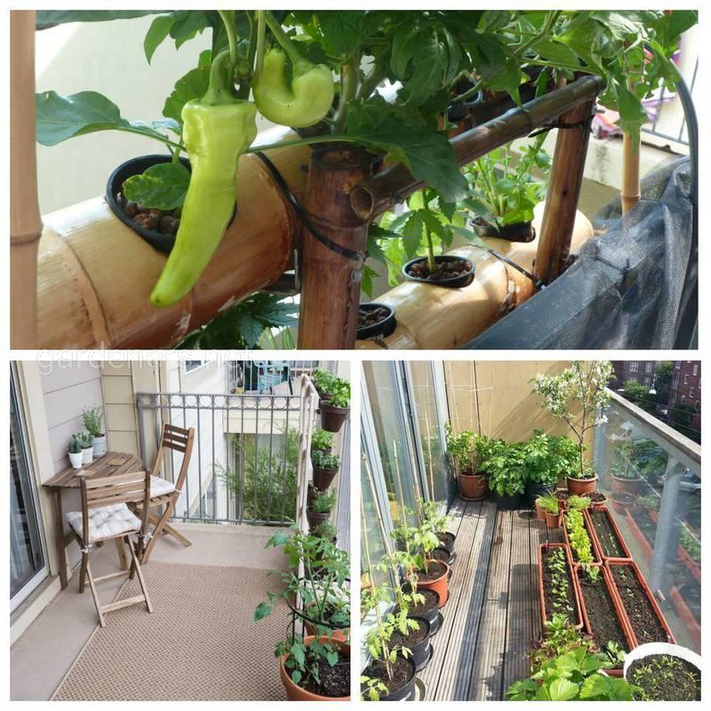 Размер горшка для выращивания овощей на балконе