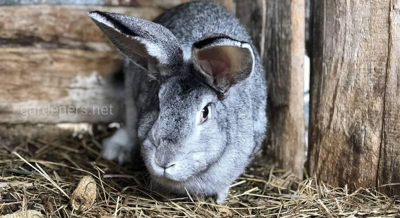 Якими бувають поїлки для кролів