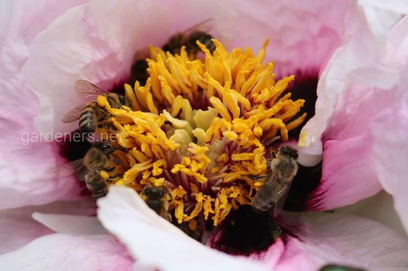 Чрезмерное добавление еды зимой грозит пчелам