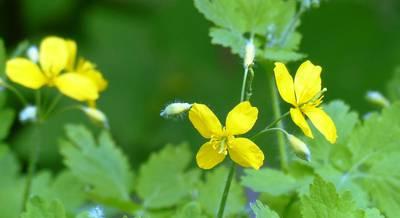 Лечение бессонницы травами 9 растений