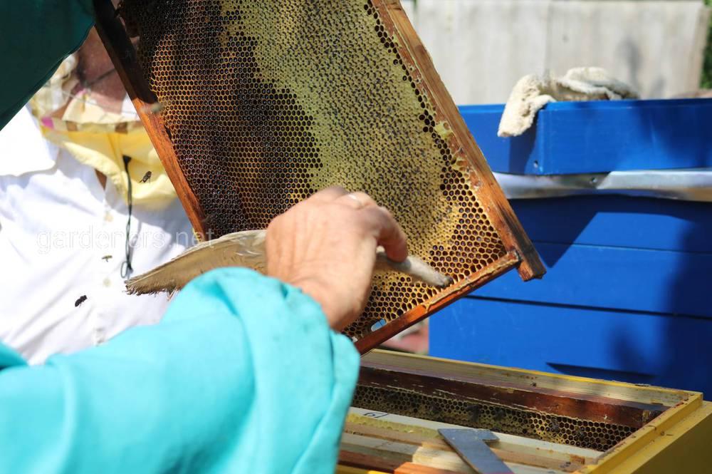 Пчеловодство в конце мая и июня