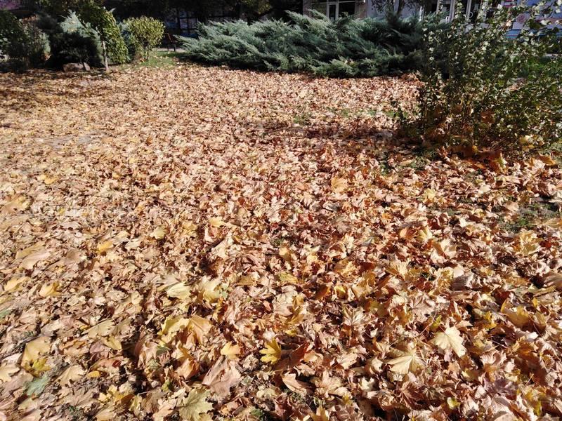 Какие листья быстро компостируются? Как определить зрелость листа?