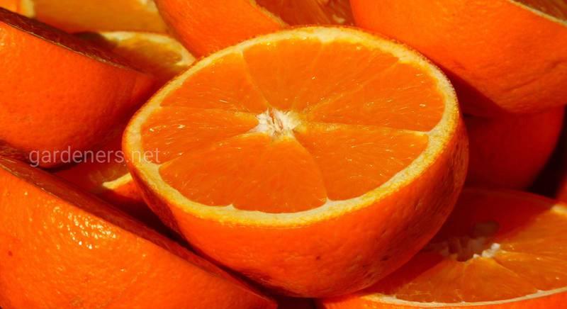 Апельсиновый сок дома и другие напитки из апельсина