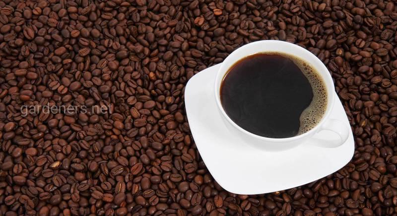 В чем польза и вред кофеина