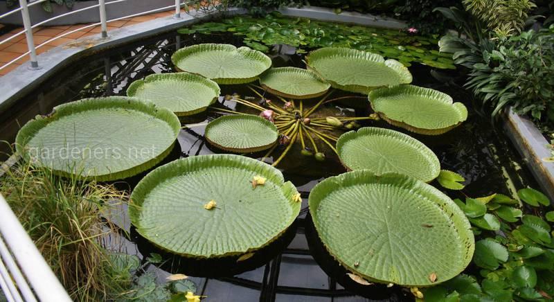 Рослини-рекордсмени: унікальні рослини книги Гіннеса