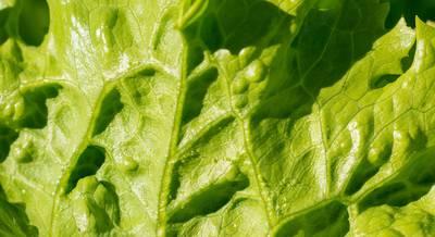 salat-ajsberg-originalnye-recepty-1.jpg