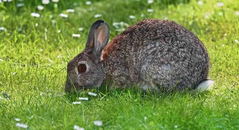 Как выращивать кроликов в ямах