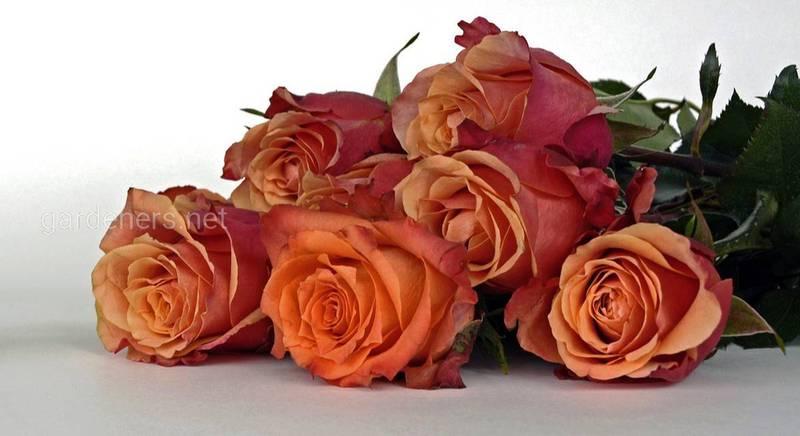 Какой букет подарить на 8 марта? Выбираем букет для мамы, жены и тёщи