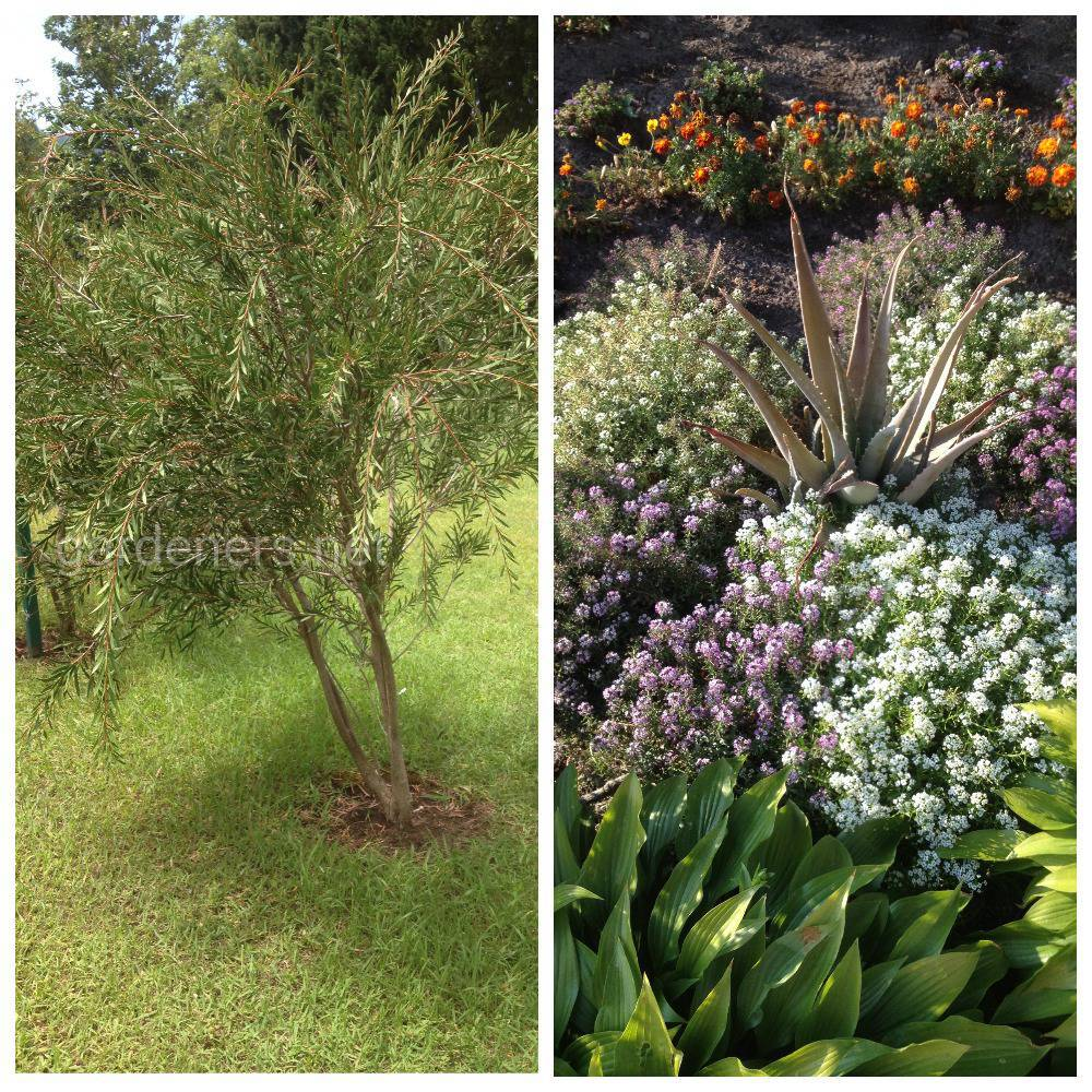 Какие растения посадить на маленьком участке