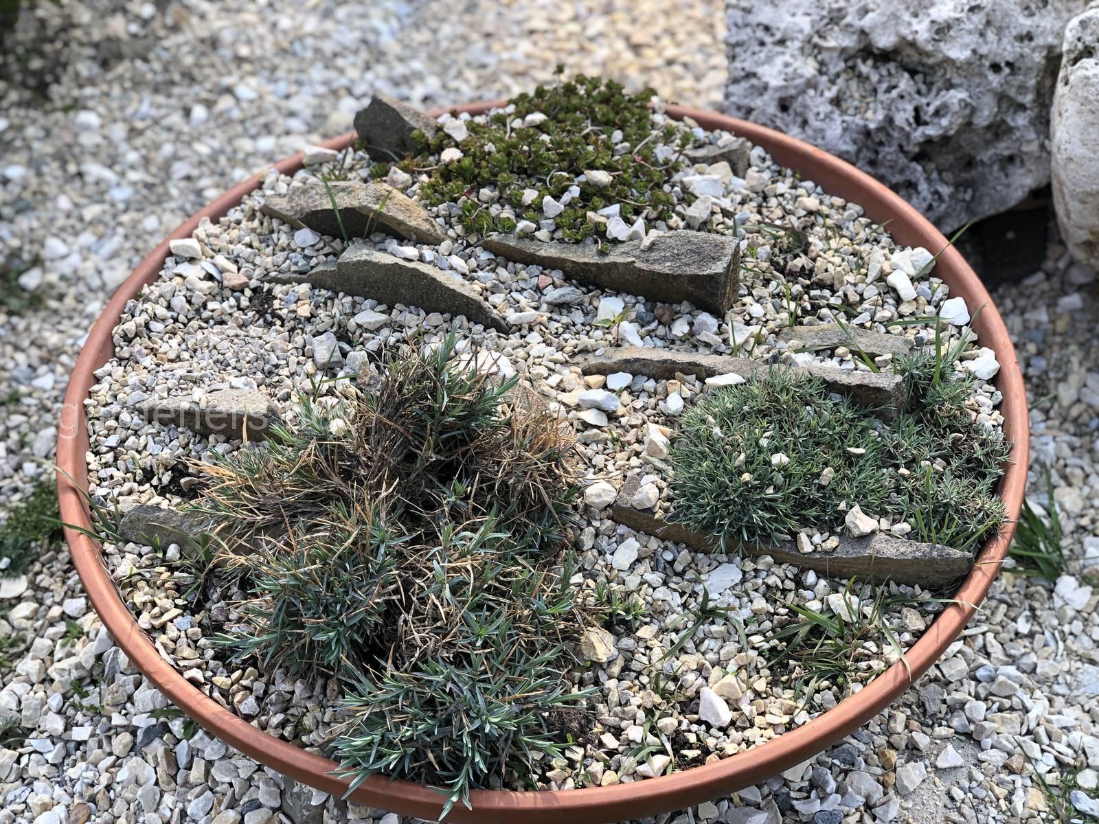 Мини-сад камней. Ботанический сад им Гришка