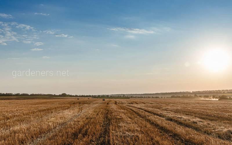 Які агротехнічні заходи необхідно провести після збору врожаю злакових культур?