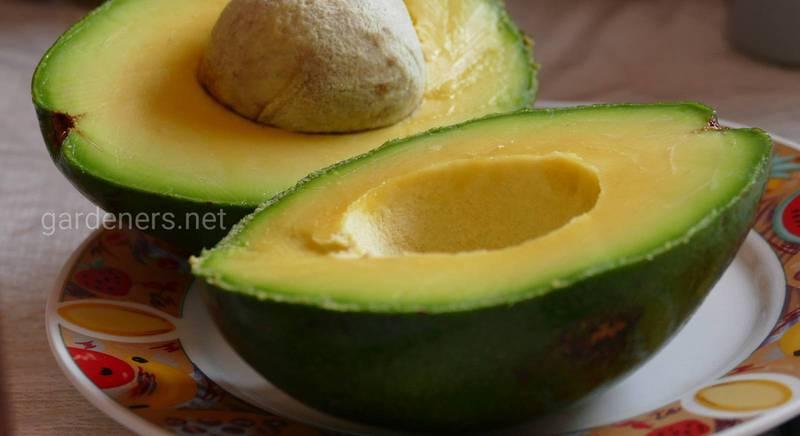 Авокадо для грудничков