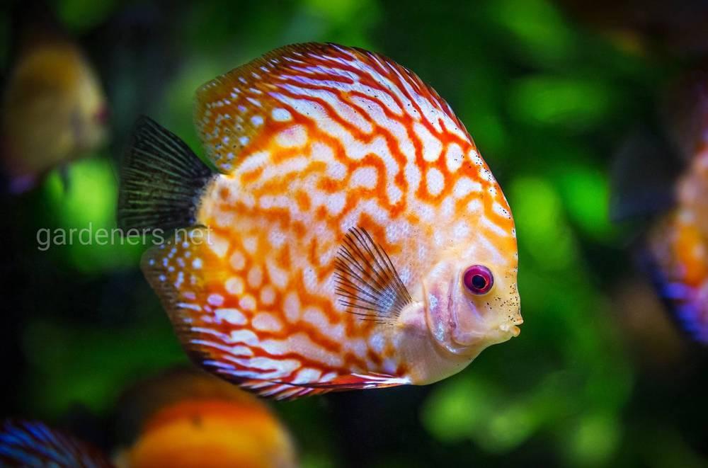 Своевременная замена воды в аквариуме