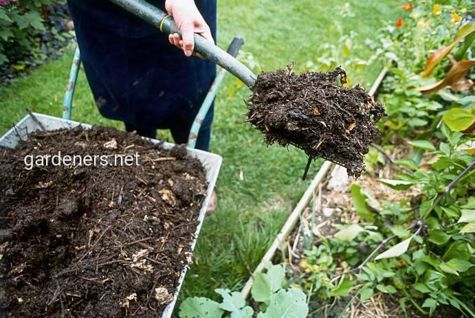 Какие садовые работы необходимо выполнить в ноябре?