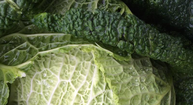 Неоціненна користь Савойської капусти і її використання в кулінарії