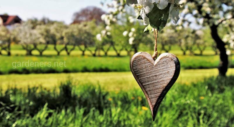 Сочетание плодовых деревьев и ягодных кустарников.jpg