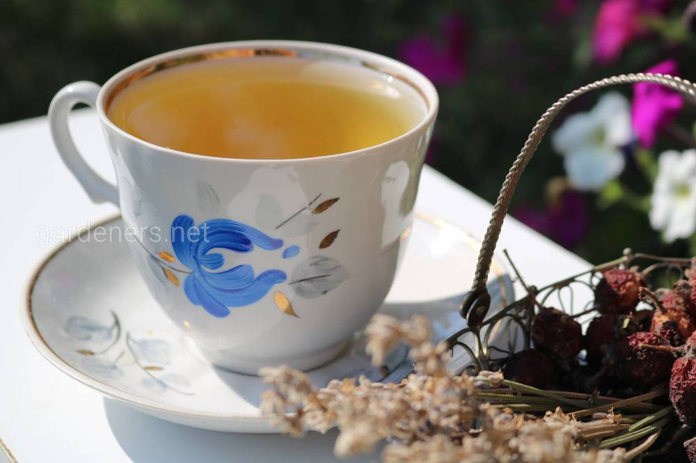 Польза и вред желтого чая