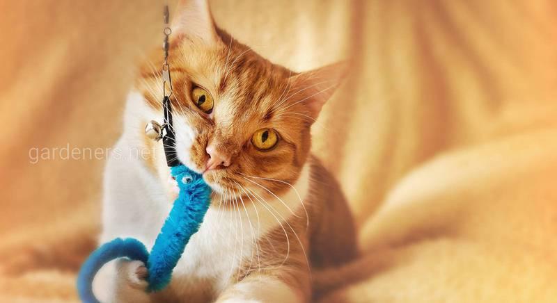 Робимо іграшки для кішок своїми руками