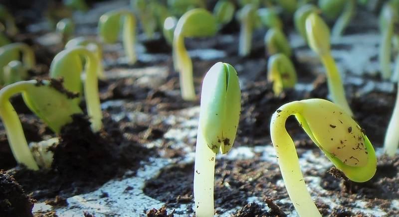 растения.jpg