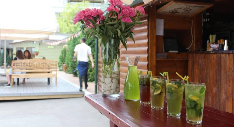 Найкорисніші зелені коктейлі з хлорела!
