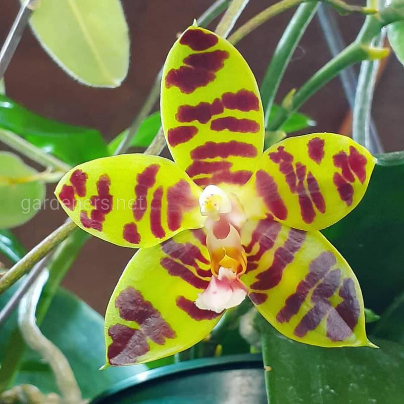 ТОП-10 любопытных фактов об орхидеях