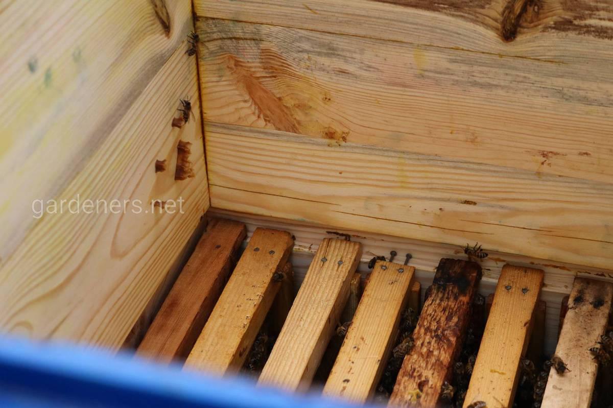 Функции пчел