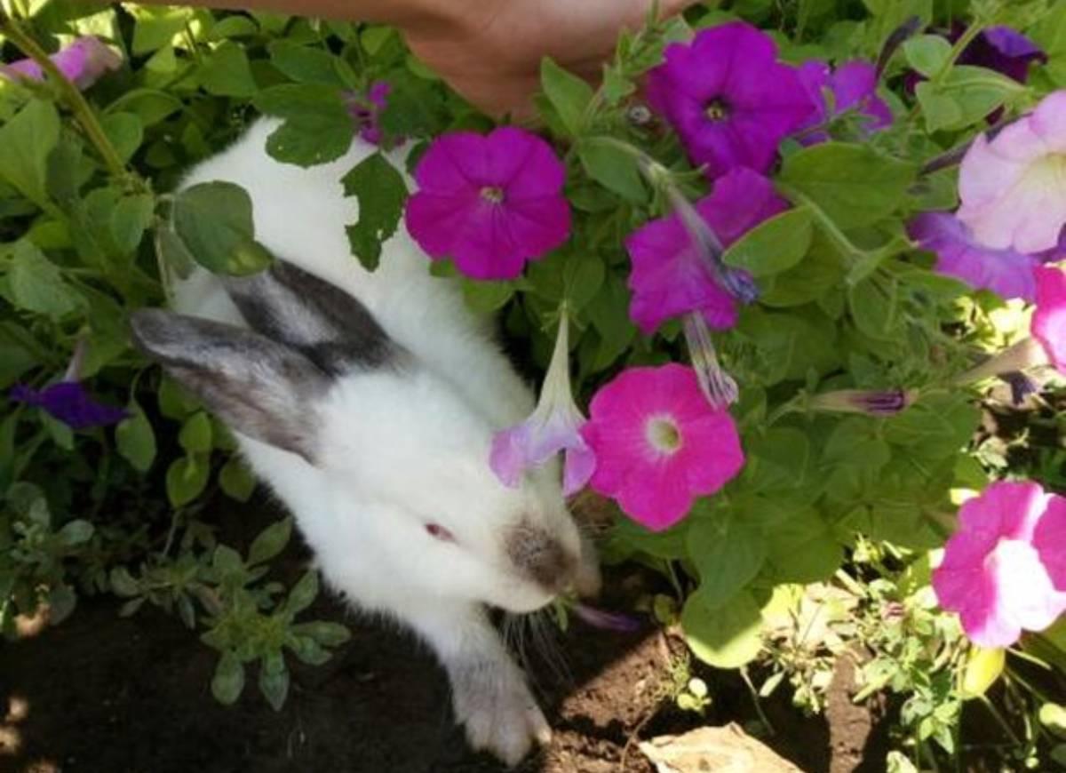 кролик блогера