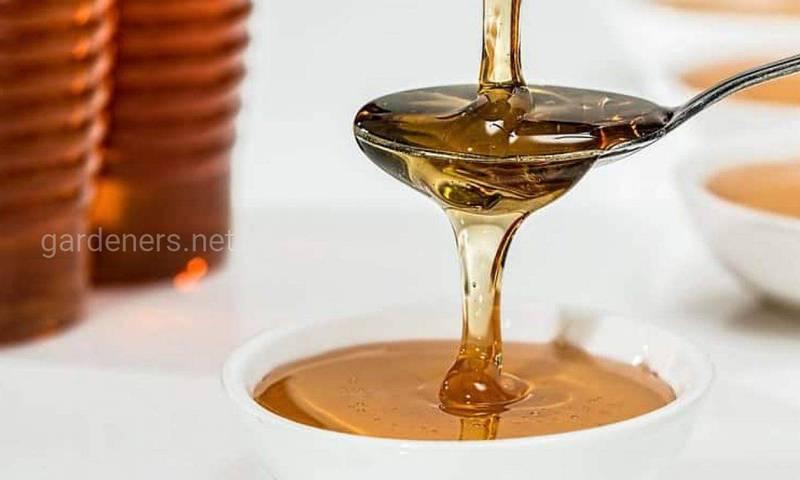Наскільки чистим є сьогодні мед?