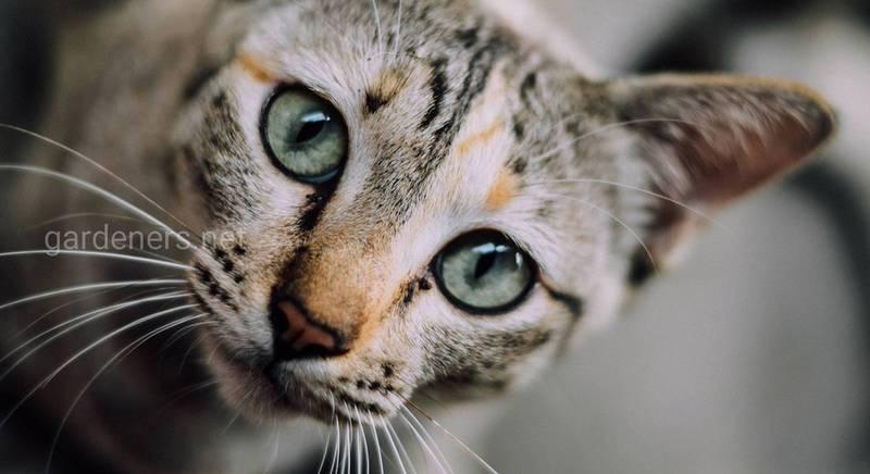 Влияние знака зодиака на характер кошки (II часть)