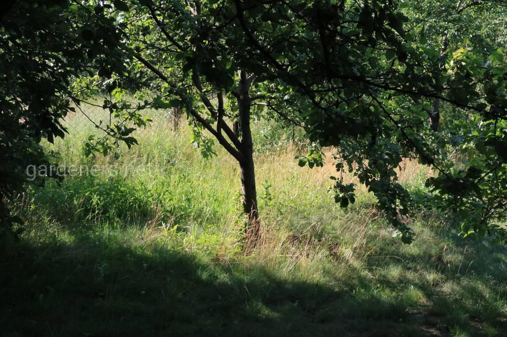 Чому дерева не дають прирости