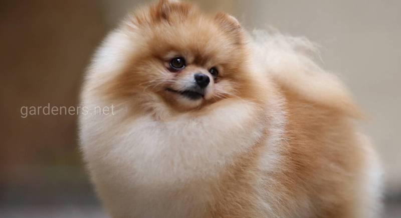 Десять наймиліших порід собак у світі