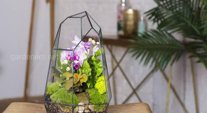 Орхідея в тераріумі: створюємо автономну екосистему в домашніх умовах