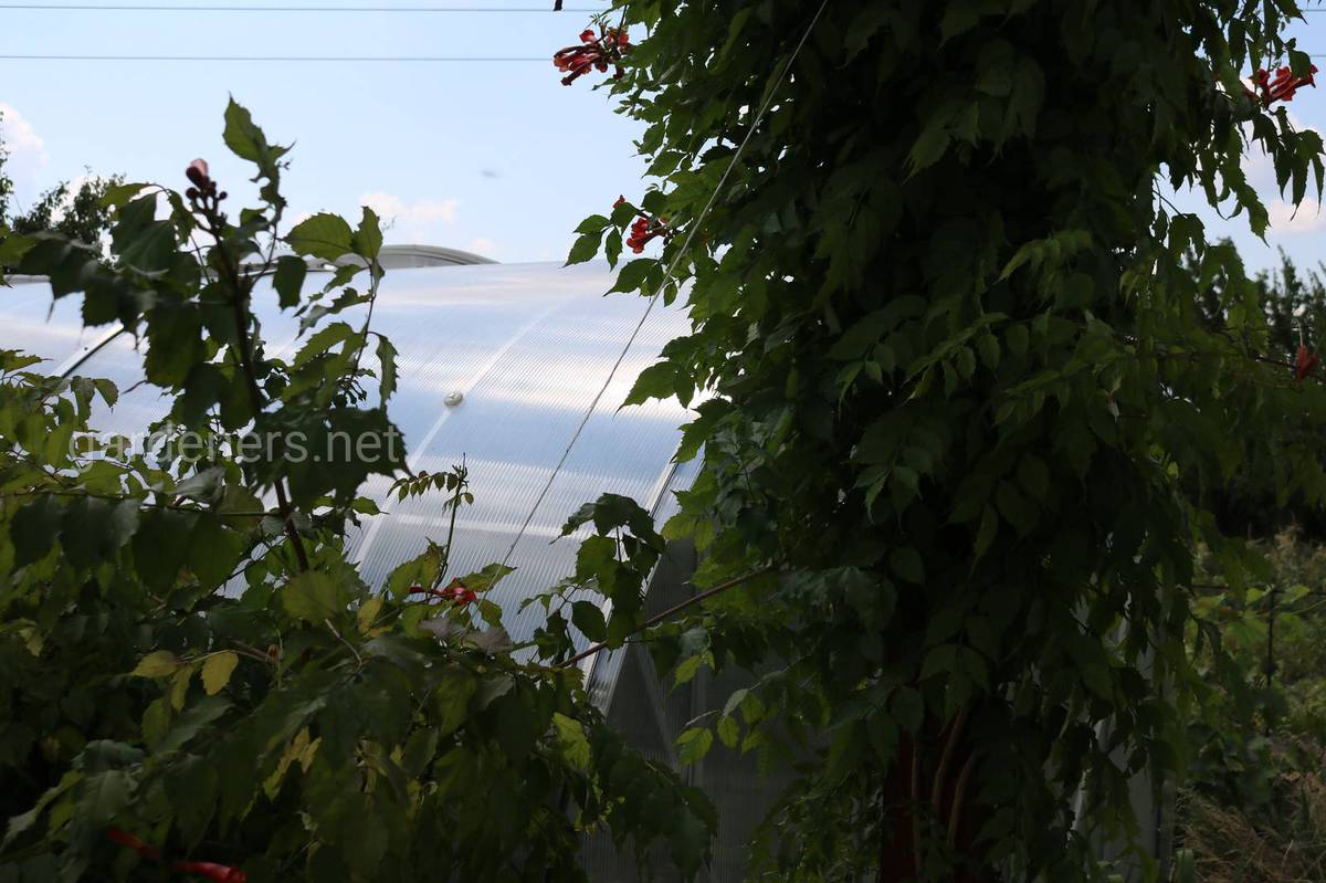 Посадка затеняющих растений