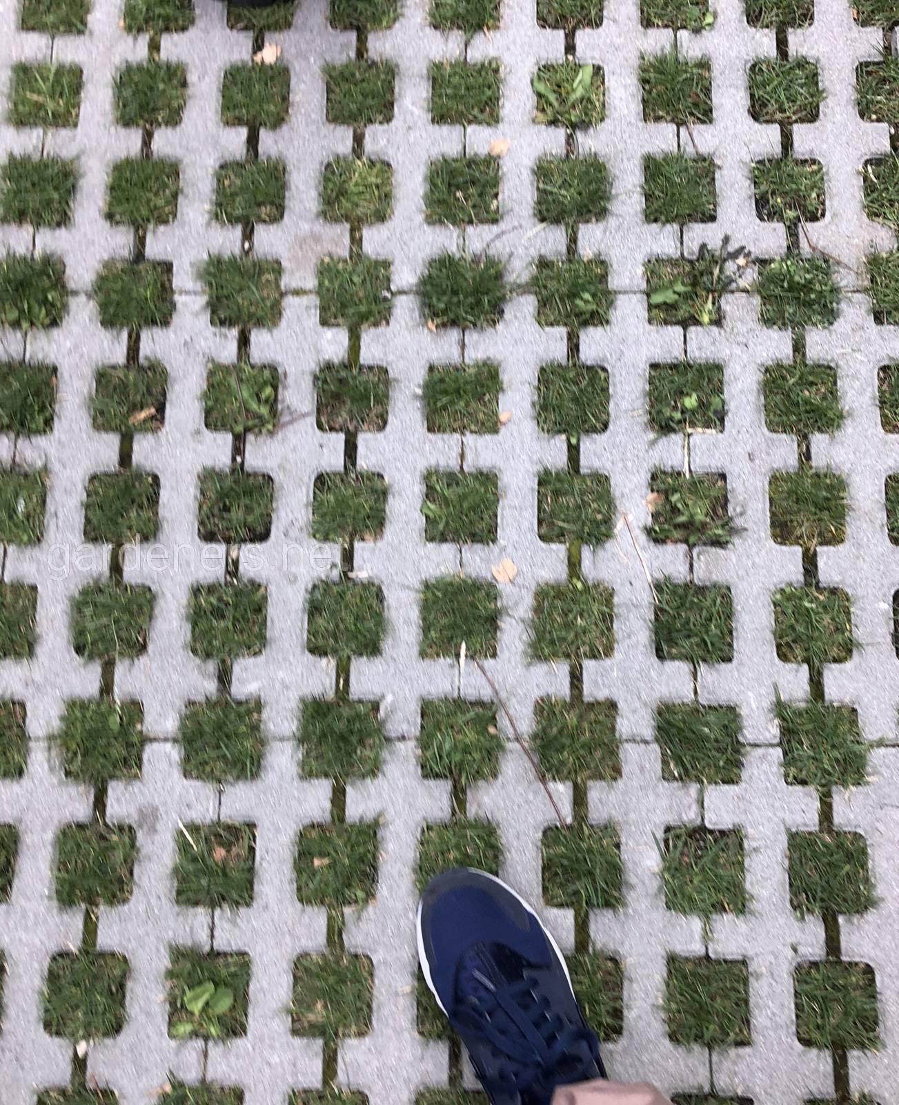 То ли газон, то от тротуар в Мюнхене