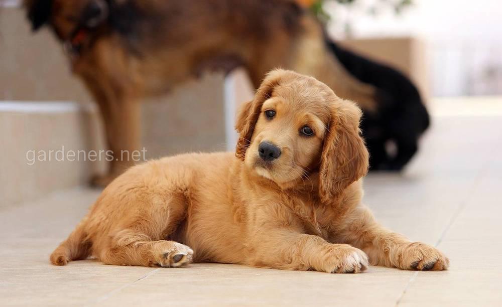 Выбираем имя щенку и определяем его место в доме