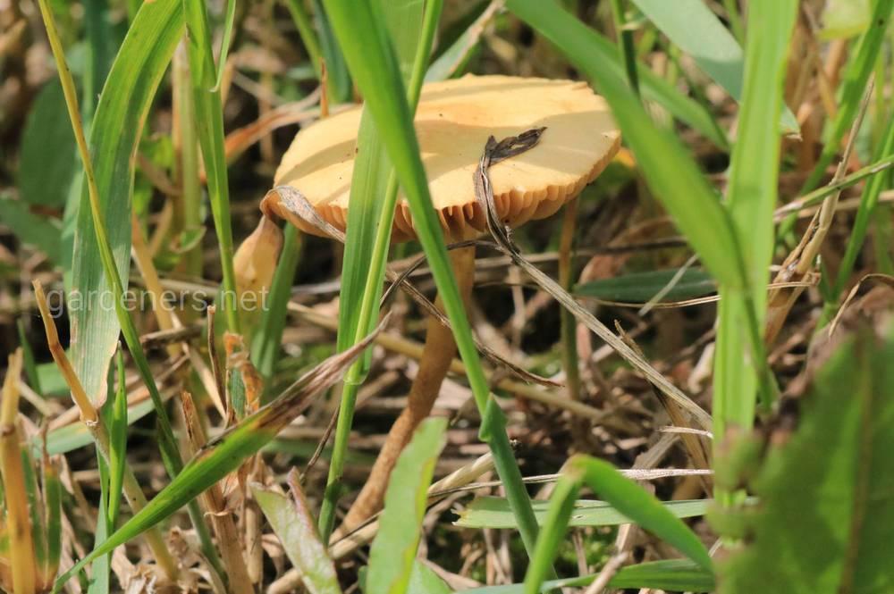 Мікоризні гриби при посадці
