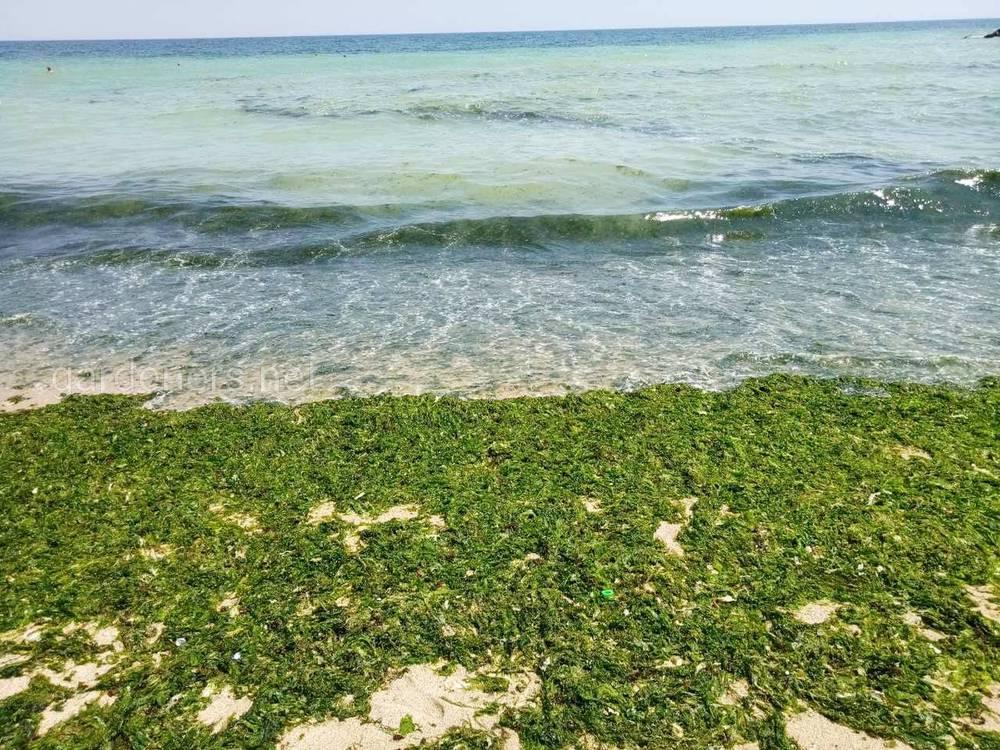 Хлорела – ефективний органічний засіб боротьби з синьо-зеленими водоростями