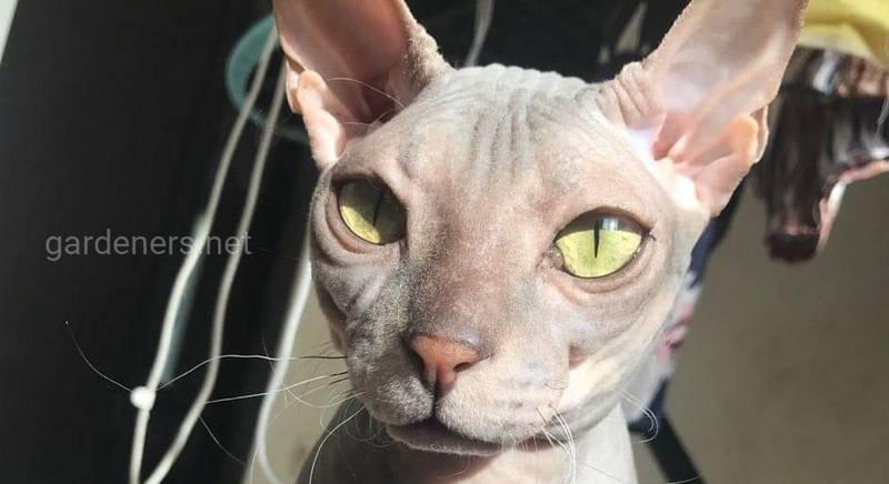 Первая домашняя кошка