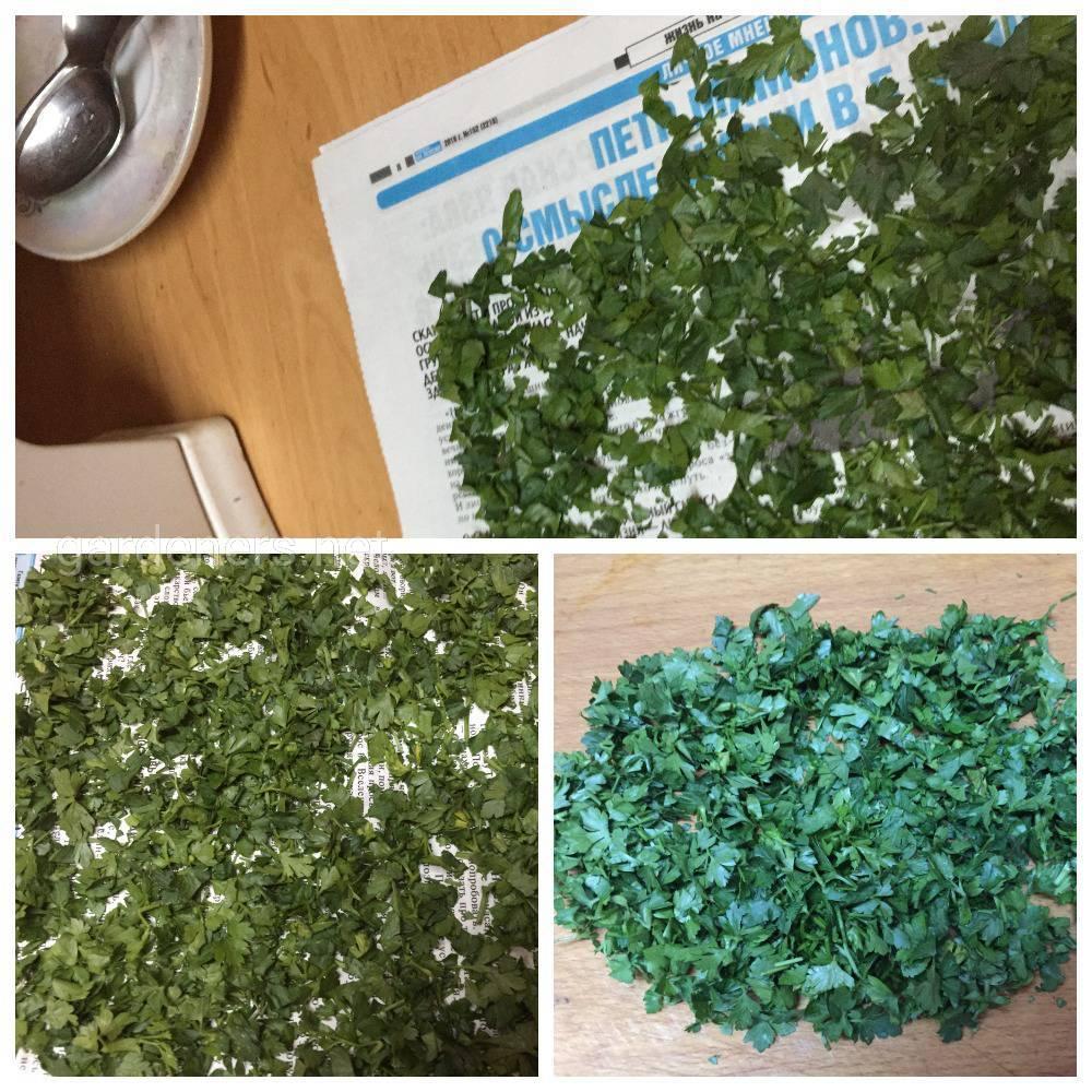 заготовки из зелени петрушки