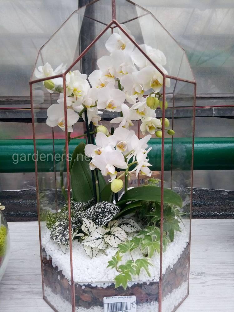 Добриво для орхідей