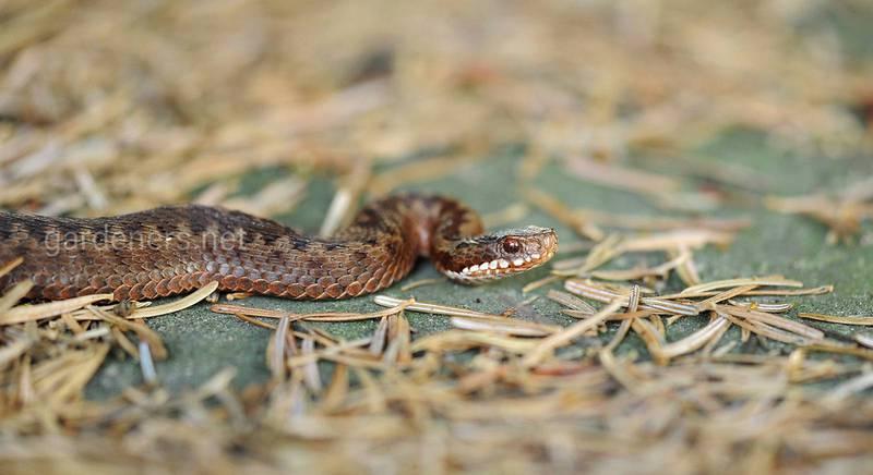 Чем и как защитится от змей