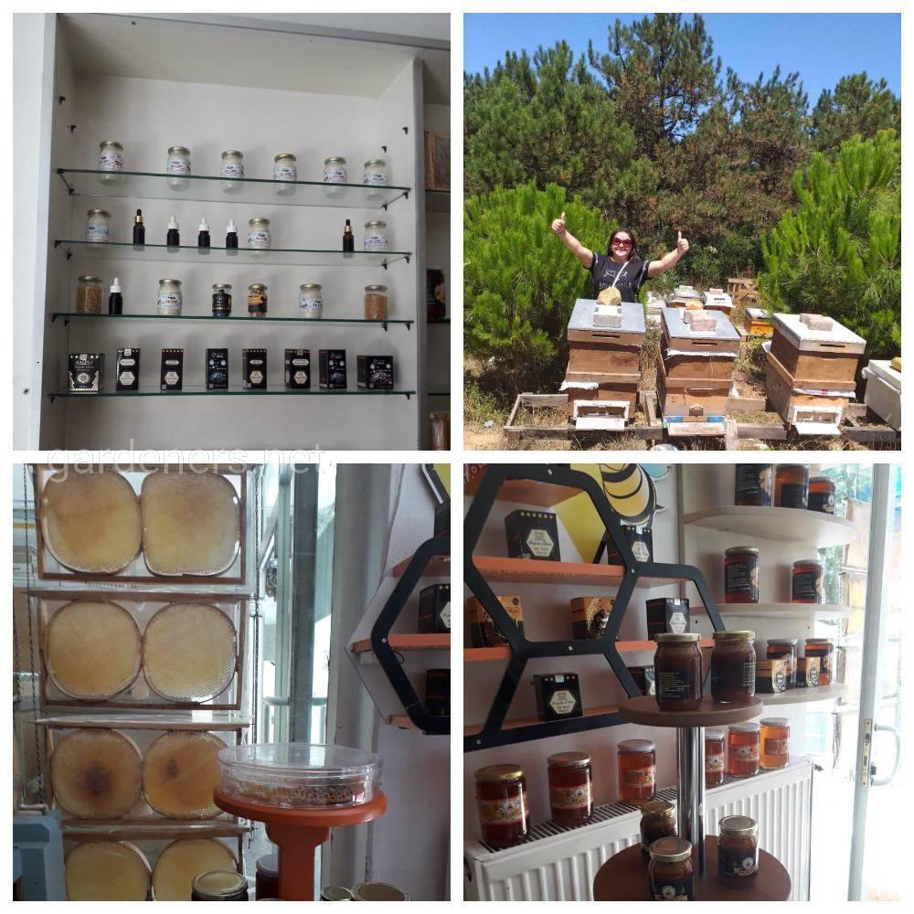 В столице Турции Анкаре насчитывается около 118 000 ульев.