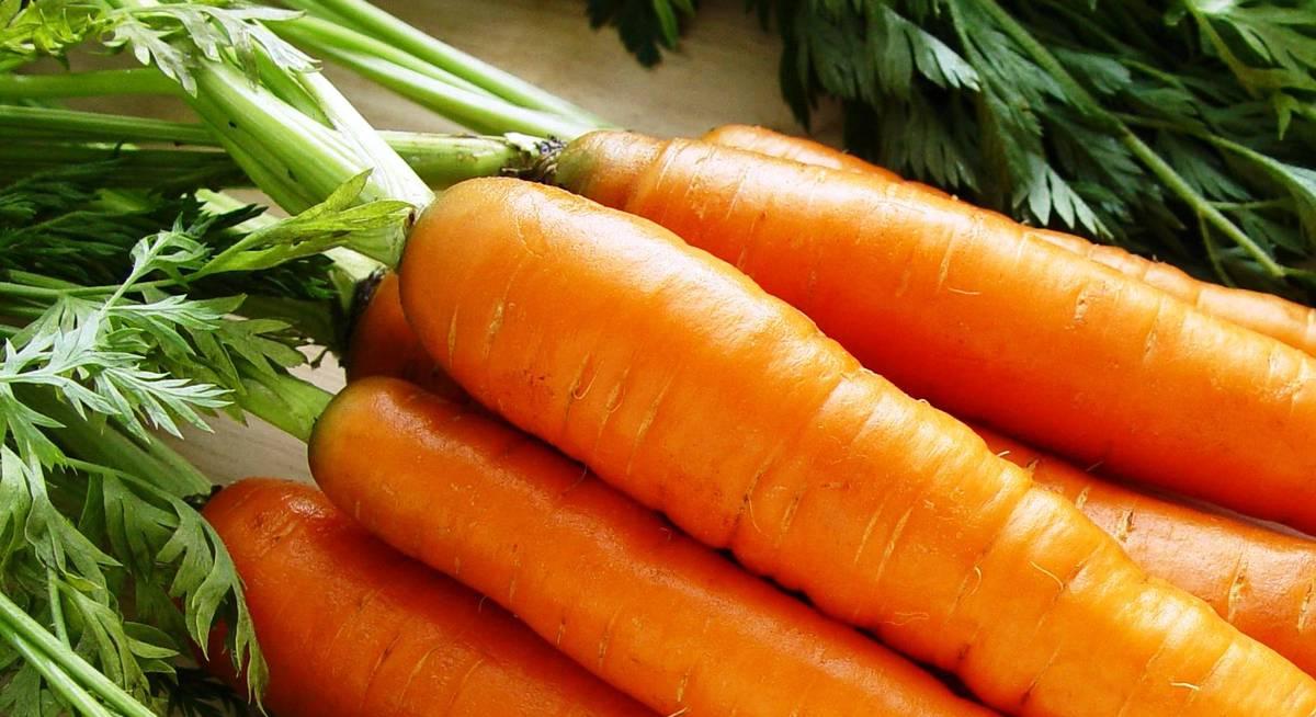 крупноплодная морковь сорта