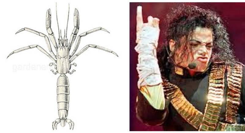 В честь Майкла Джексона назван доисторический краб-отшельник -  Mesoparapylocheles michaeljacksoni