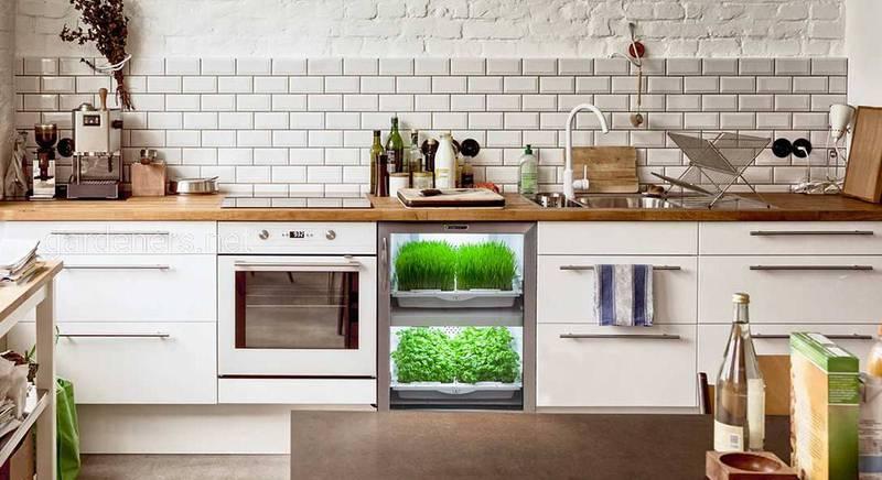 Навіщо потрібні гроубокси і як їх використовувати — кімнатне вирощування