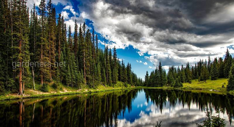 Як відновити ліс