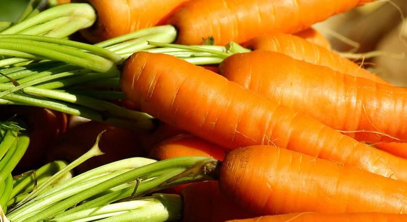 Как правильно выращивать и собирать урожай моркови?